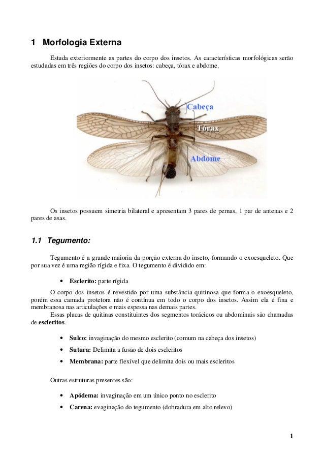 1 1 Morfologia Externa Estuda exteriormente as partes do corpo dos insetos. As características morfológicas serão estudada...