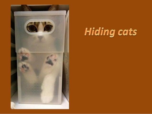 644 hiding cats