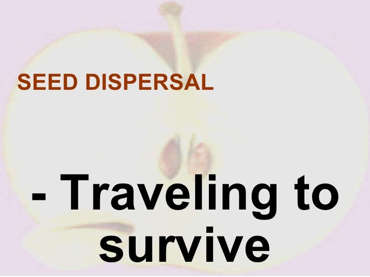 Seeds Travel by Water Seed Dispersal Traveling to