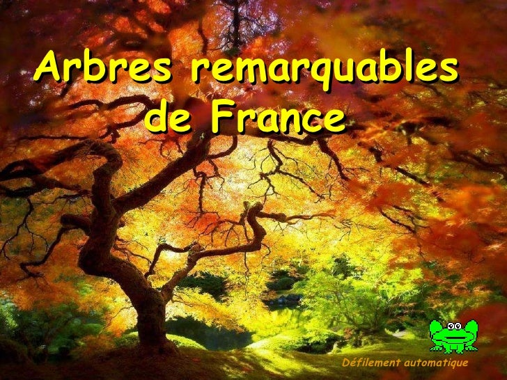 Arbres remarquables  de France Défilement   automatique