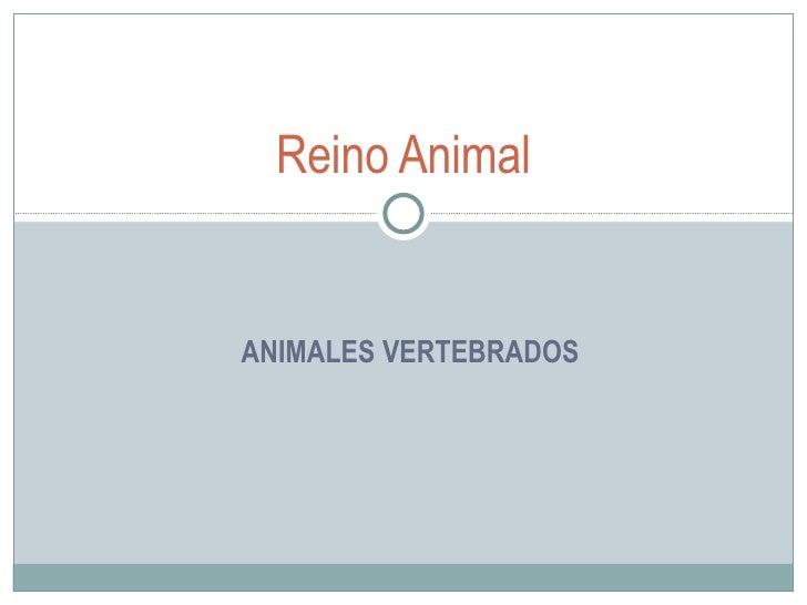 ANIMALES VERTEBRADOS Reino  Animal