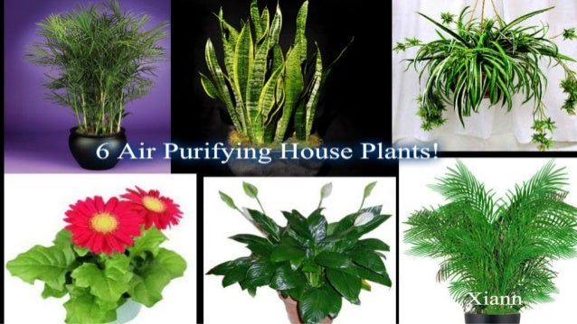 Air Purifying House Plants 6 Air Purifying House Plants