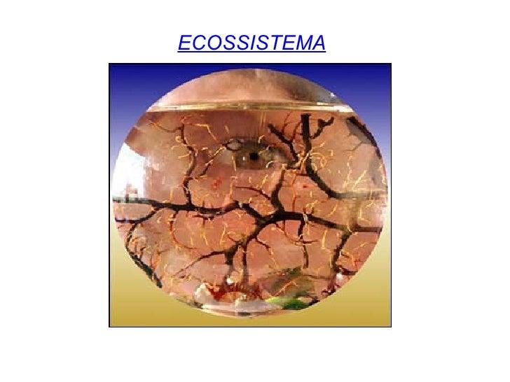 ECOSSISTEMA