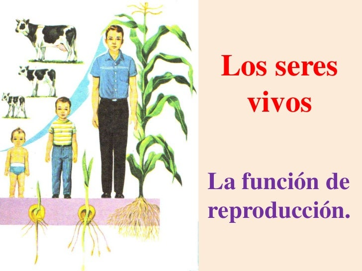 Los seres  vivosLa función dereproducción.