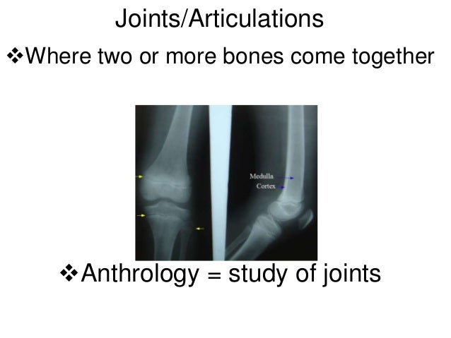 Joints/ArticulationsWhere two or more bones come together    Anthrology = study of joints