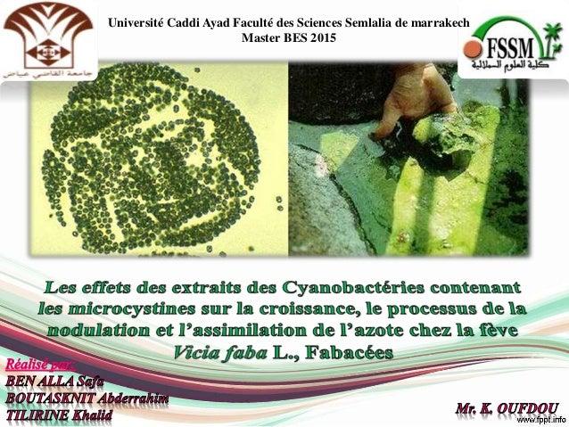 Université Caddi Ayad Faculté des Sciences Semlalia de marrakech Master BES 2015