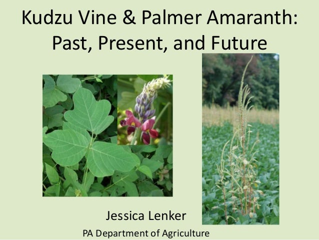 Kudzu Vine & Palmer Amaranth: Past, Present, and Future  Jessica Lenker PA Department of Agriculture