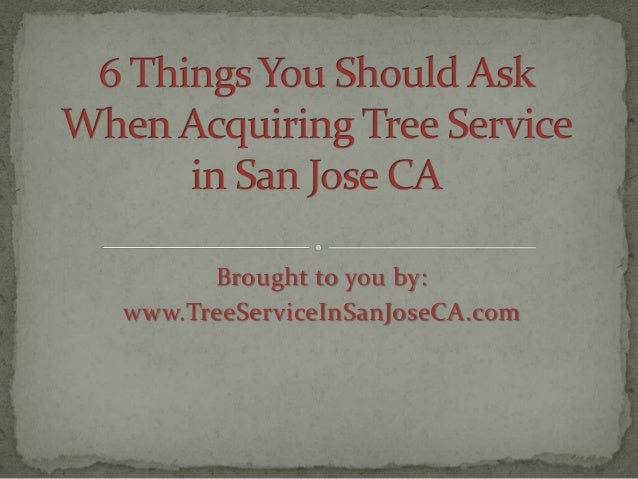 6 Things You Should Ask When Acquiring Tree Service in San Jose CA