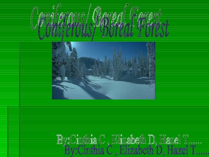 6th Period Coniferous