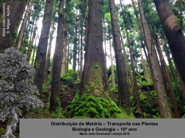 MariaJoãoDrumond S.Miguel,Açores Distribuição de Matéria – Transporte nas Plantas Biologia e Geologia – 10º ano Maria João...
