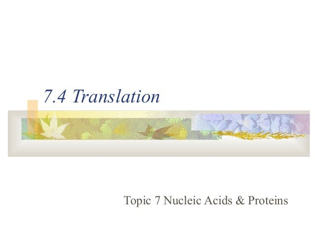 7.4 Translation Topic 7 Nucleic Acids & Proteins