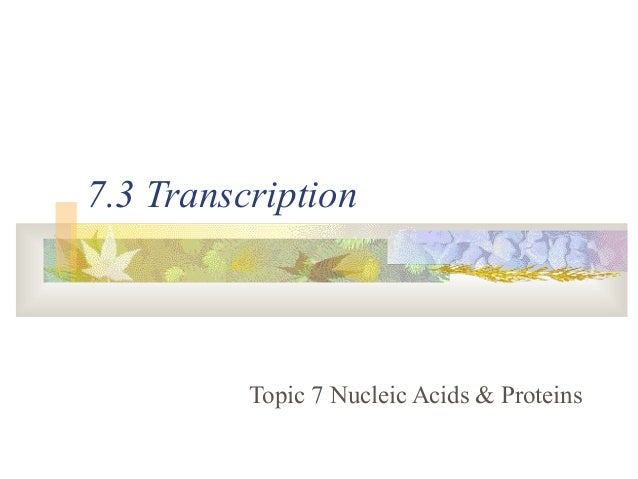 7.3 Transcription Topic 7 Nucleic Acids & Proteins