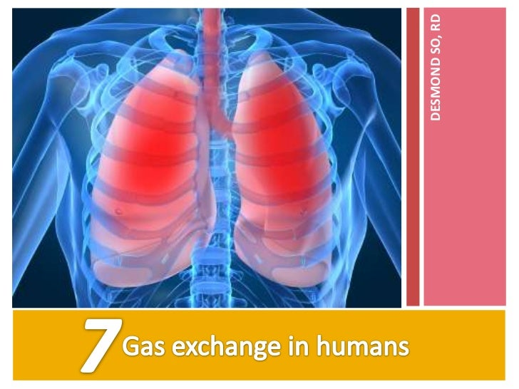 7.1 human breathing system