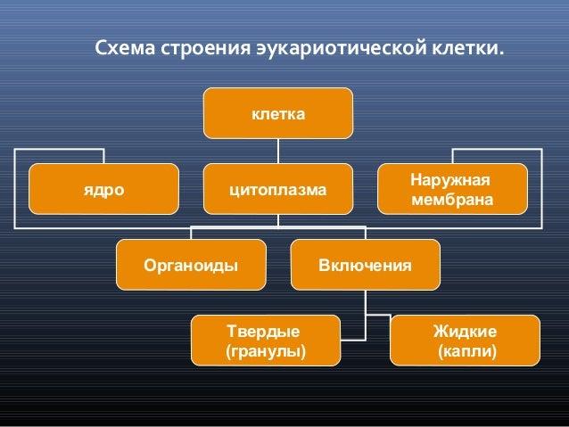 Схема строения эукариотической