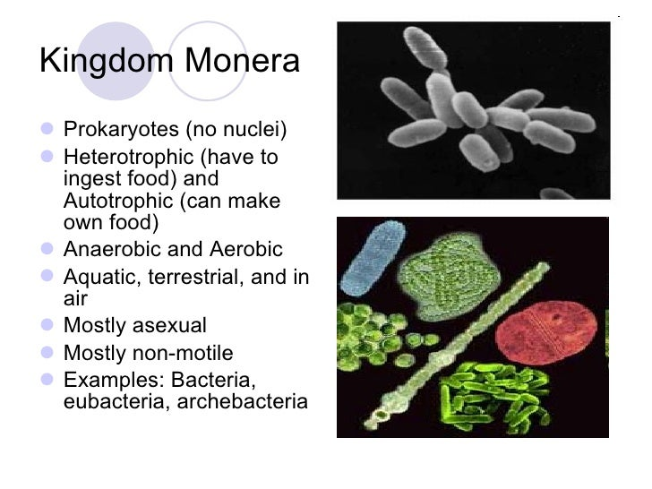 kingdom monera Directions: answer the following questions on the kingdom monera answer to the best of your ability.