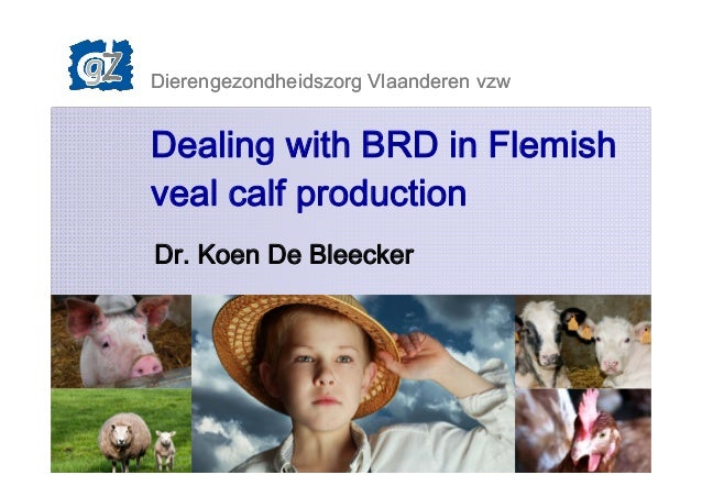Dierengezondheidszorg Vlaanderen vzw 1 Dealing with BRD in Flemish veal calf production Dr. Koen De Bleecker Dierengezondh...