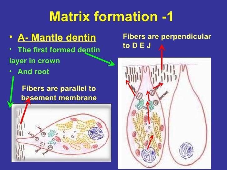 Matrix Mineralization of Matrix Mineralization