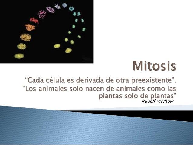 """""""Cada célula es derivada de otra preexistente"""".""""Los animales solo nacen de animales como las                        planta..."""