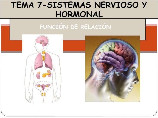 FUNCIÓN DE RELACIÓNTEMA 7-SISTEMAS NERVIOSO YHORMONAL