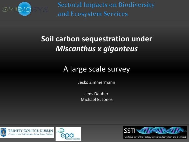 Soil carbon sequestration under     Miscanthus x giganteus      A large scale survey          Jesko Zimmermann            ...