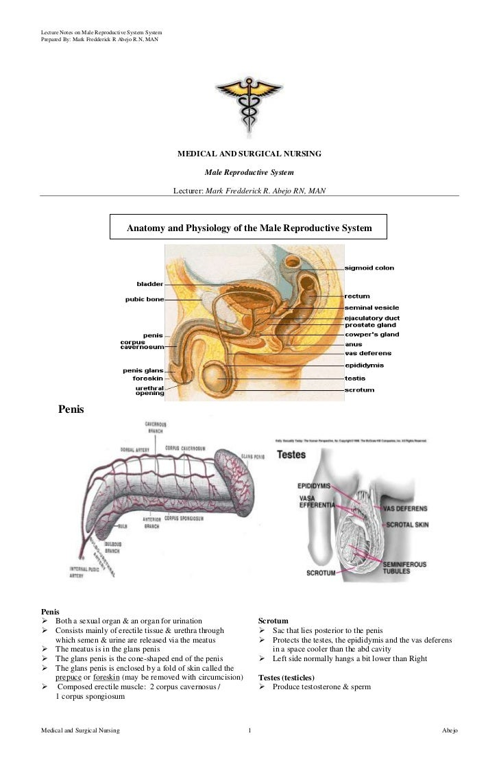 Lecture Notes on Male Reproductive System SystemPrepared By: Mark Fredderick R Abejo R.N, MAN                             ...