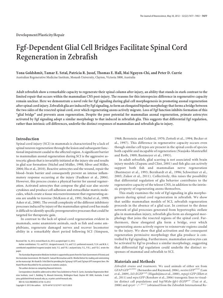 The Journal of Neuroscience, May 30, 2012 • 32(22):7477–7492 • 7477Development/Plasticity/RepairFgf-Dependent Glial Cell B...