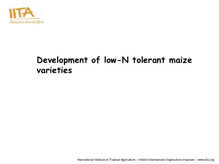 Development of low-N tolerant maizevarieties         International Institute of Tropical Agriculture – Institut internatio...