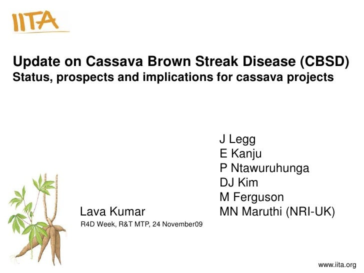 Update on Cassava Brown Streak Disease (CBSD)Status, prospects and implications for cassava projects                      ...