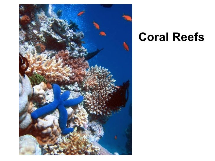 7.5 - Coral Reefs