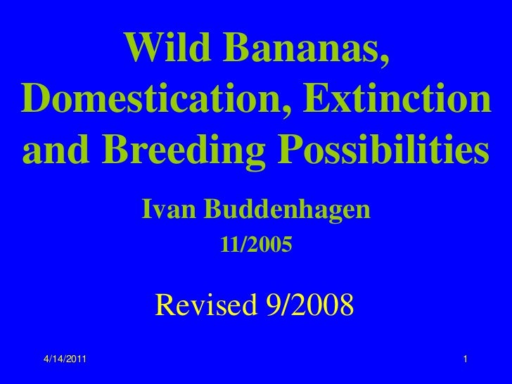 Wild Bananas, Domestication, Extinction and Breeding Possibilities