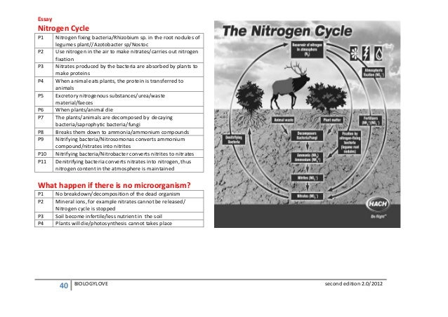 nitrogen cycle essay questions Cell cycle essay cell cycle story assignment [pic] by: maria galarza - rojas biology period: 1 g1 phase this is blob it is a human cell that is going through the cell cycle right now it is beginning mitosis and is in the g1 phase at this point bob is synthesizing its structural proteins and enzymes to perform its functions.
