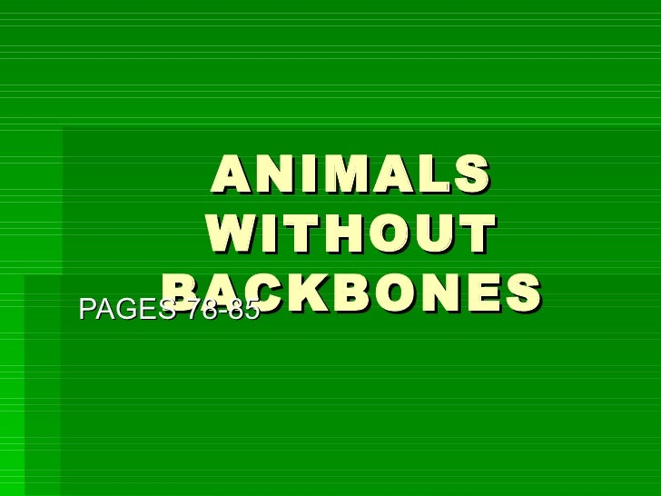 ANIMALS WITHOUT BACKBONES PAGES 78-85
