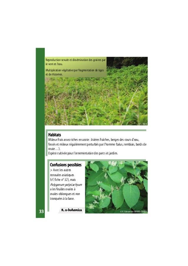 photo plantes tropicales riches en azote