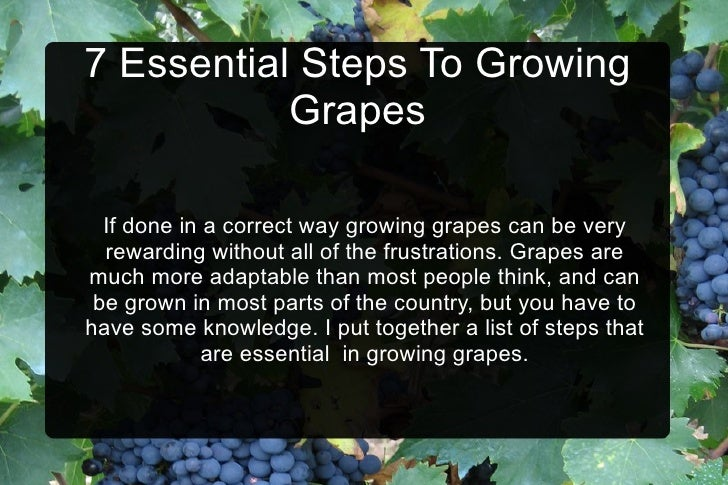 7 Essential Steps To Growing Grapes If done in a correct way growing grapes can be very rewarding without all of the frust...