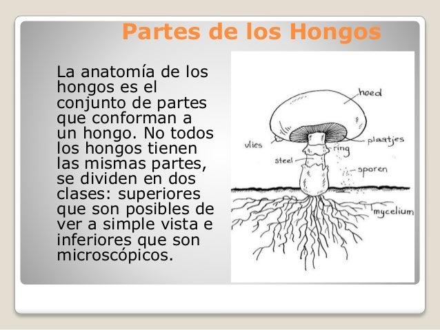 El hongo en la ingle a los hombres el tratamiento del ungüento