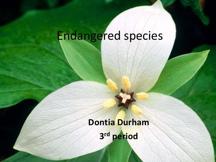 7 of the most endangered species