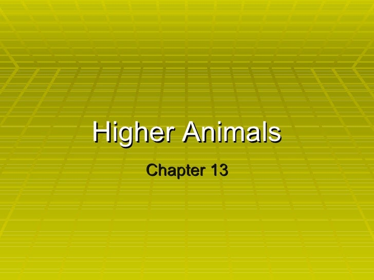 Chapter 13- higher animals