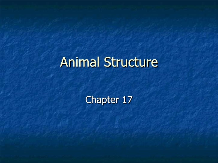 Animal Structure Chapter 17