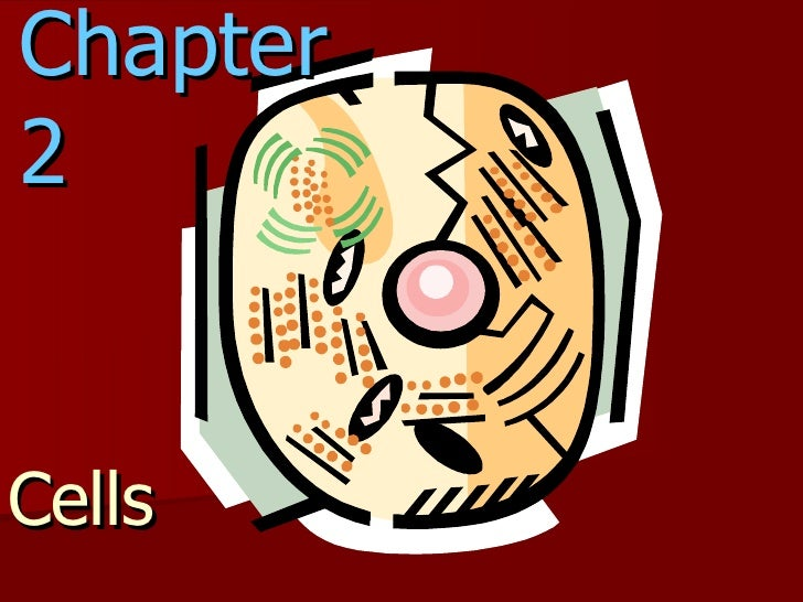 Chapter 2 Cells