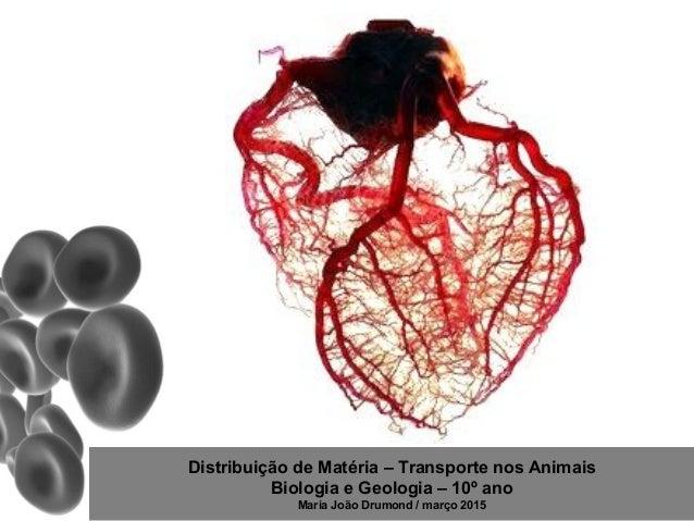 Distribuição de Matéria – Transporte nos Animais Biologia e Geologia – 10º ano Maria João Drumond / março 2015