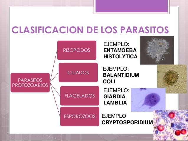 La foto los parásitos en el pez fluvial de la foto