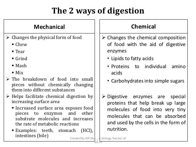 chemical and physical processes of digestion