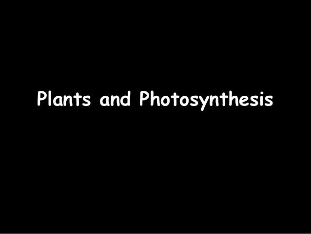 25/02/13Plants and Photosynthesis