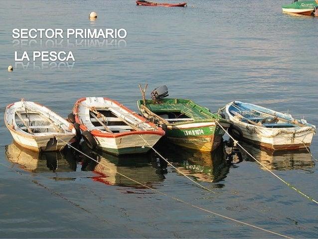 LA REGIÓN NOROESTE incluye todaslas costas gallegas. Es la región másimportante, tanto por el volumen dela pesca desembarc...