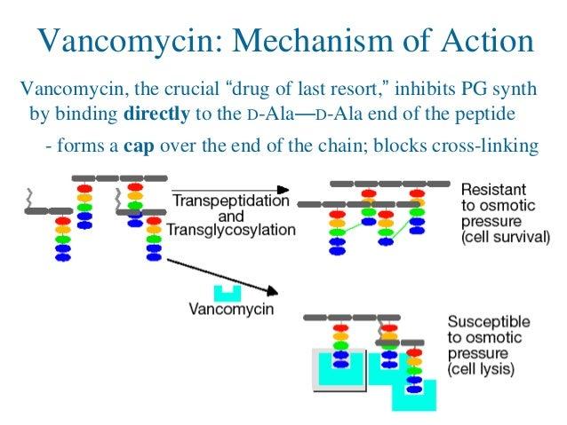Methicillin resistance in Staphylococcus aureus ...