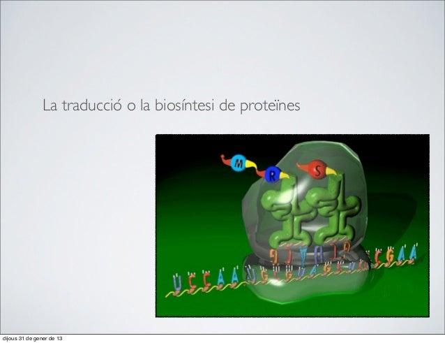 La traducció o la biosíntesi de proteïnesdijous 31 de gener de 13
