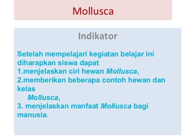 mollusca.ppt