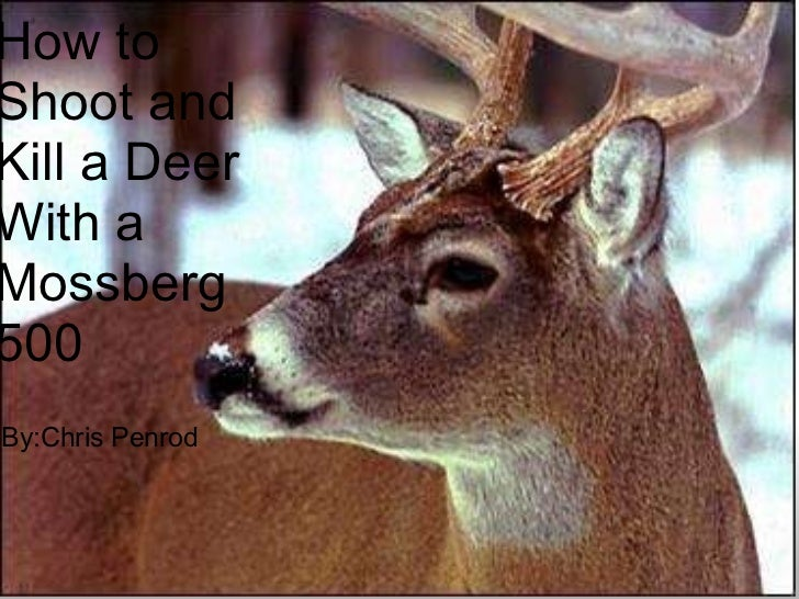 by: Chris Penrod How to Shoot a Deer With a Mossberg 500 How to Shoot and Kill a Deer With a Mossberg 500 By:Chris Penrod