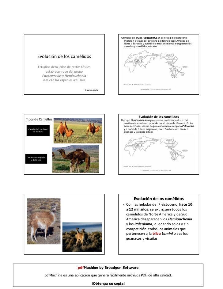 Animales del grupo Paracamelus en el inicio del Pleistoceno                                                               ...
