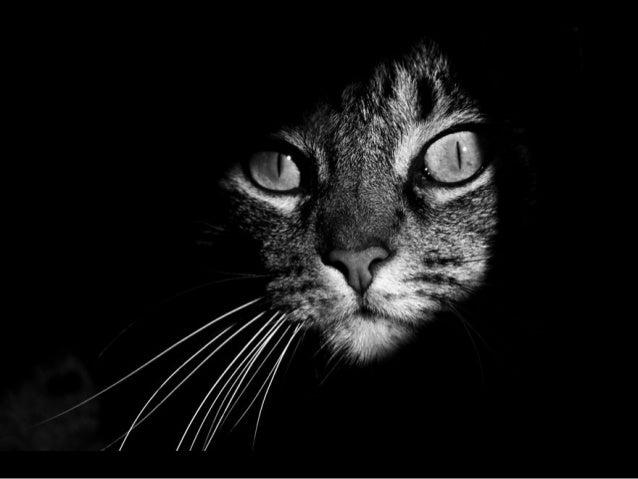 822 - international CAT day